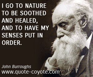 quotes - I go to nature to be soothed and healed, and to have my senses put in order.